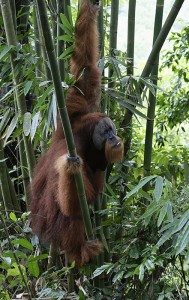 Wildlife of the Leuser Eco System