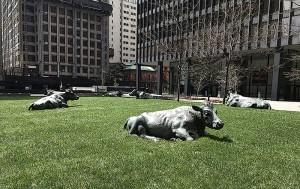 Die Chance - Kurzroman Toronto - Kühe